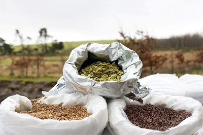 hops and malt